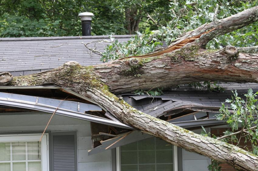Tree fell on house